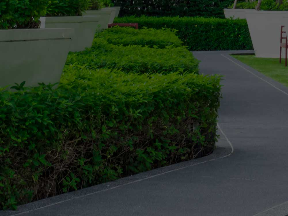 Cartersville  Commercial Landscaping
