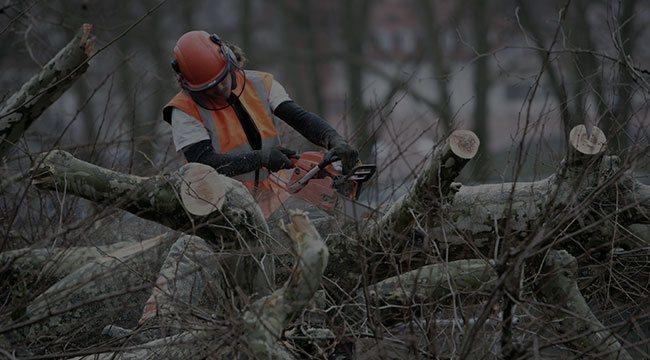 Cartersville  Tree Service